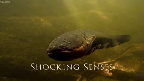 Shocking Senses