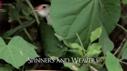 Spinners and Weavers