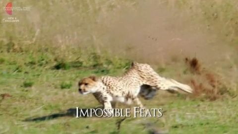 Impossible Feats
