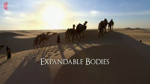 Expandable Bodies