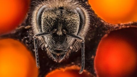 A thrilling look at the first 21 days of a bee's life