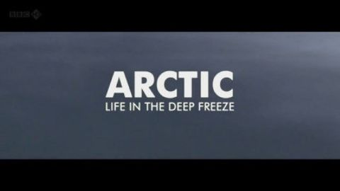 Arctic - Life in the Deep Freeze