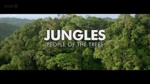 Jungles - People of the Trees