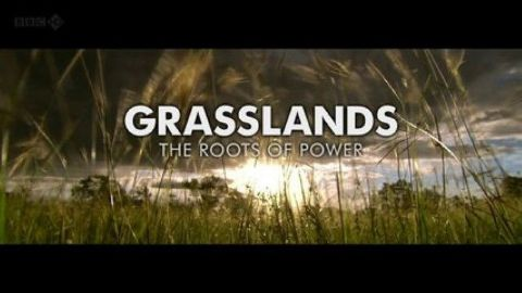 Grasslands - Roots of Power