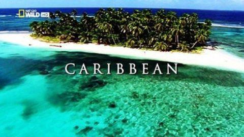 Wild Islands: Caribbean