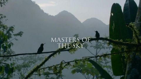 Masters of the Sky