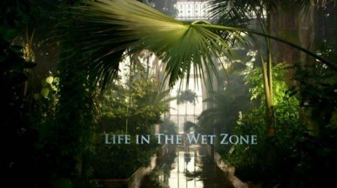 Life in the Wet Zone