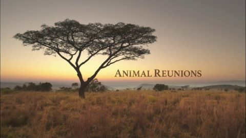 Animal Reunions