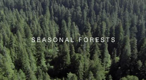 Seasonal Forests