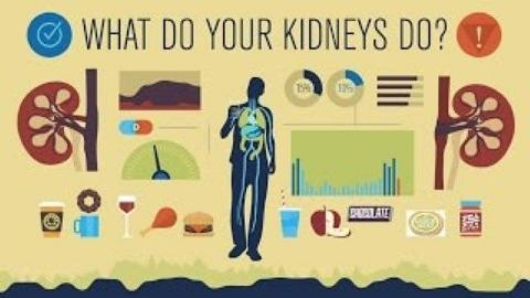 How do your kidneys work?