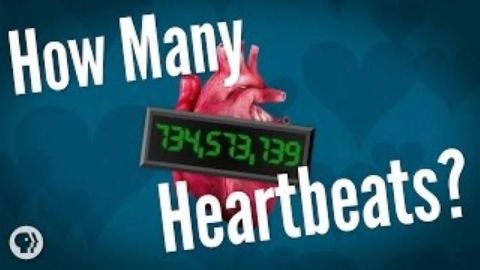 How Many Heartbeats Do We Get?