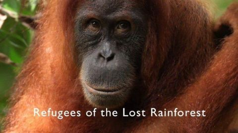 Refugees of the Lost Rainforest