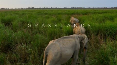 Grasslands Planet Earth Ii Watch Free Online Documentaries