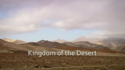 Kingdom of the Desert