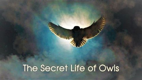 The Secret Life of Owls