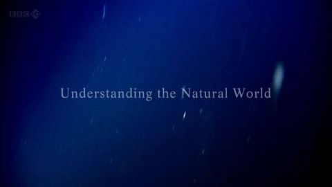 Understanding the Natural World