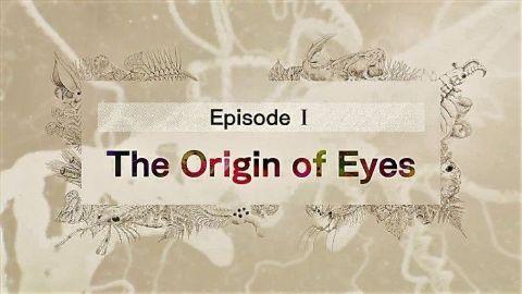 The Origin of Eyes