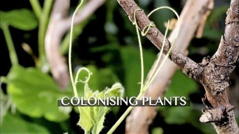 Colonising Plants