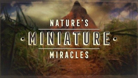 Nature's Miniature Miracles
