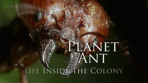 Planet Ant: Life Inside the Colony