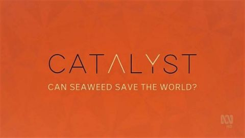 Can Seaweed Save the World