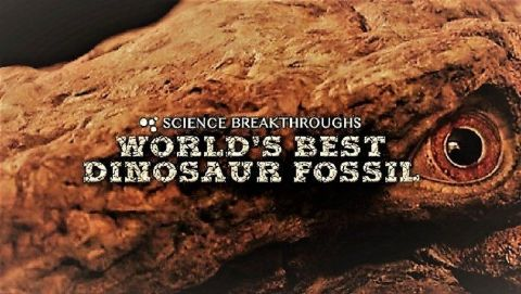 World's Best Dinosaur Fossil