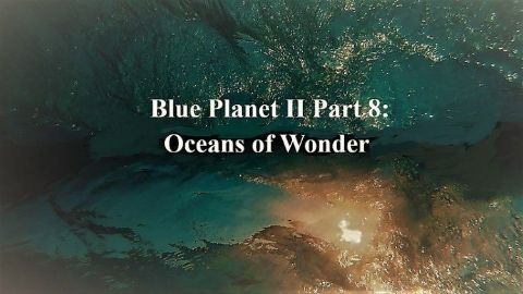 Oceans of Wonder