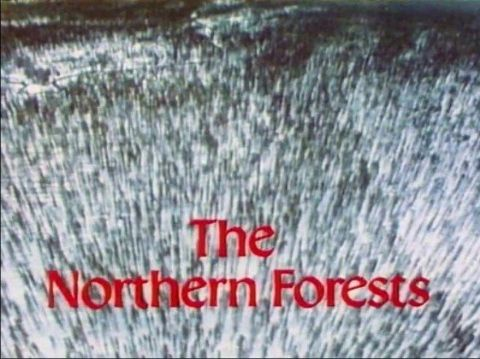 The Northern Forests