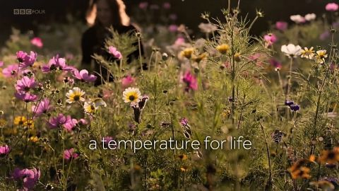 A Temperature for Life