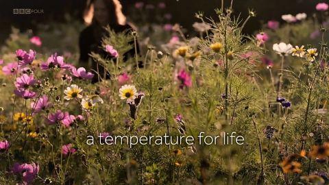 A Temperature for Life