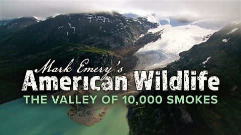 American Wildlife: Valley of 10,000 Smokes