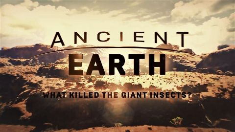 What Killed The Giant Insects