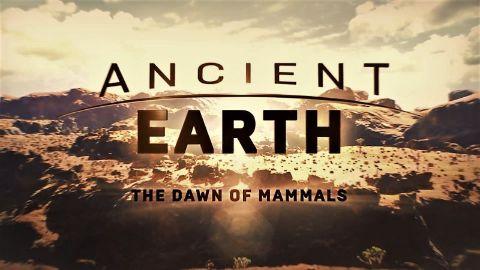 The Dawn of Mammals