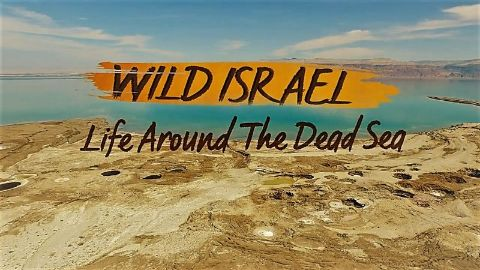Life Around the Dead Sea