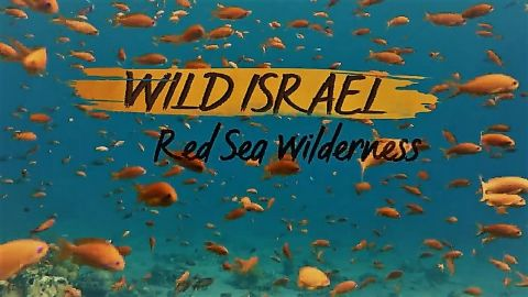 Red Sea Wilderness