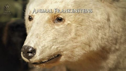Animal Frankensteins