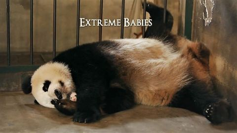 Extreme Babies