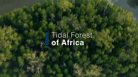 Tidal Forest of Africa