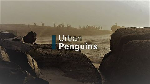 Urban Penguins