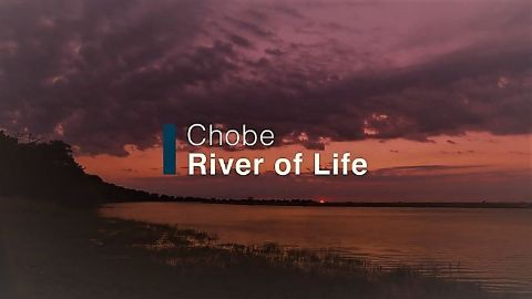 Chobe: River of Life