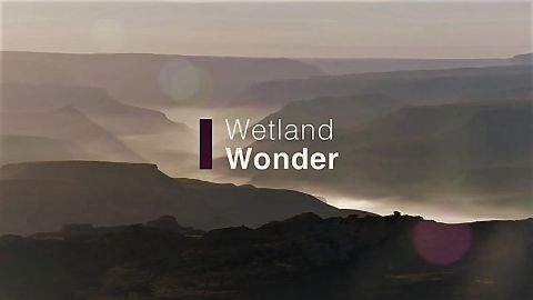 Wetland Wonder