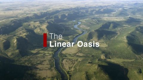 The Linear Oasis