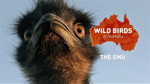 The Emu