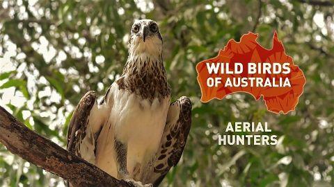 Aerial Hunters