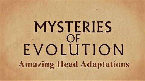 Amazing Head Adaptations