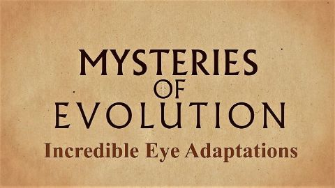 Incredible Eye Adaptations