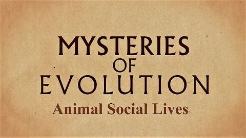 Animal Social Lives