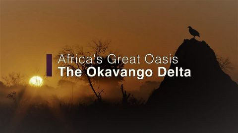 Africas Great Oasis the Okavango Delta