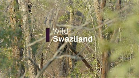 Wild Swaziland