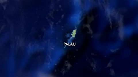 Palau Sharks Sanctuary